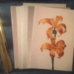 HAL: 5 Floral Bermuda cruise menus SS Veendam 1982